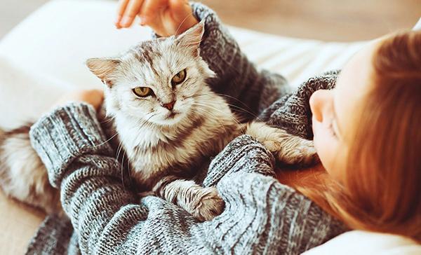 Народные методы лечения кота