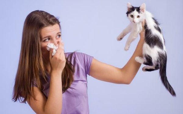 Какие есть виды аллергии на кошек и котов: классификация, лечение