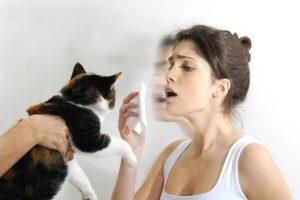 Аллергия на кошачью шерсть симптомы фото