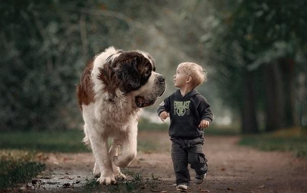 Как проверить ребенка на аллергию на собак