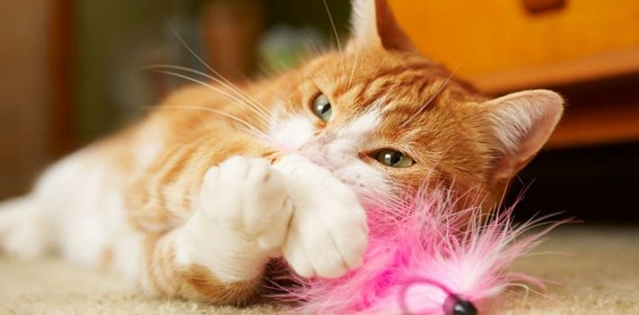 Аллергия на кошек сыпь на животе